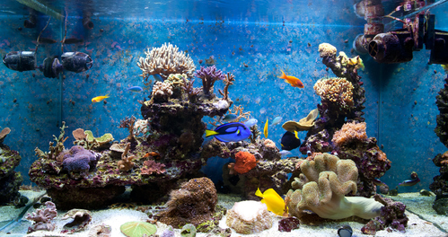 aquarium-ambiance10-main-8207521