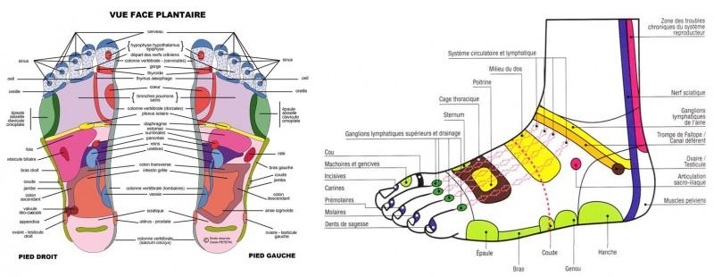 CARTHOLOGIE PIEDS