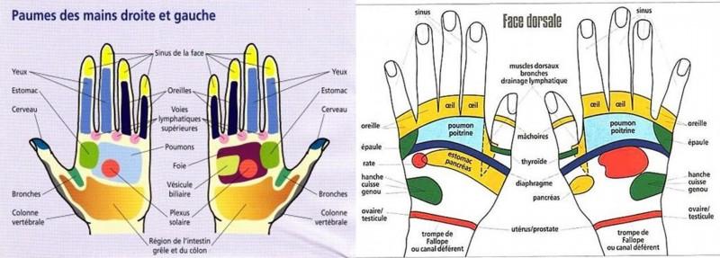 carthologie mains
