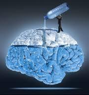 cerveau eau 2