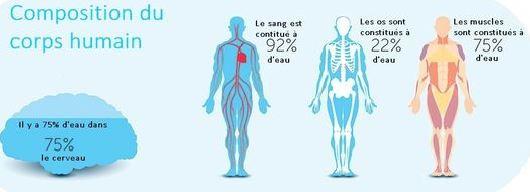 composizione dell'acqua del corpo